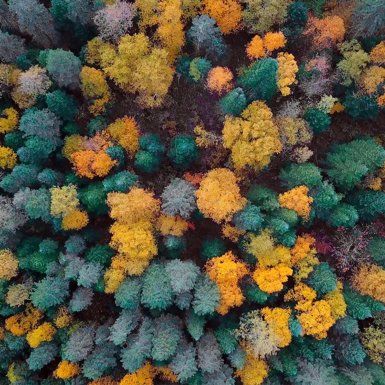 Érablière Domaine Acer vue aérienne forêt automne