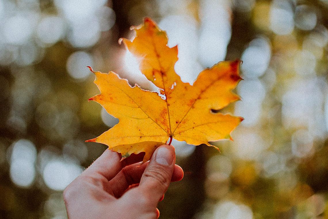 Feuille d'érable automne Andras Vas Unsplash